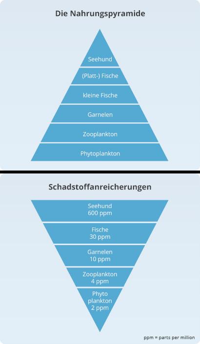 Die Nahrungspyramide und Schadstoffanreicherung